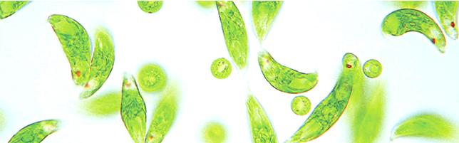 酵素 効果 ユーグレナ